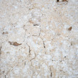 Rock Texture — Stock Photo #25423421
