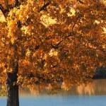 Autumn — Stock Photo #12764505