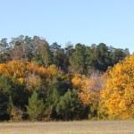 Autumn — Stock Photo #13662978