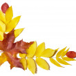 Autumn leaves of trees - Stock Photo