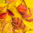 Leaves of autumn — Stock Photo