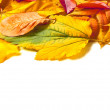 Stock Photo: Leaves of autumn
