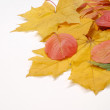 Leaves of autumn - Stock Photo