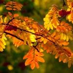 Autumn — Stock Photo #15002415
