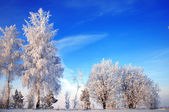 Trees covered with rime — Stok fotoğraf