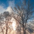 Winter birch — Stock Photo