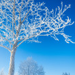 Trees covered with rime — Stock Photo