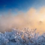 Winter birch — Stock Photo #18188717