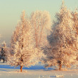 Trees covered with rime - Stock Photo