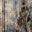 Trees covered with rime — Stock Photo #19456609