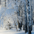 Trees covered with rime — Stock Photo #19456611