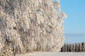 Trees covered with rime — 图库照片