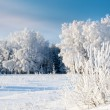 Trees covered with rime — Stock Photo #19647955