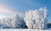 Trees covered with rime — Stockfoto