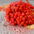 Rowan. rowanberry. rowan-tree. sorb. wild ash — Stock Photo #26205157
