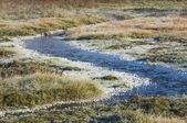 Hoarfrost on autumn grass — Stock Photo