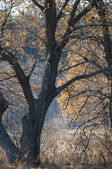 Autumn frost on the grass and trees — Stock Photo