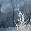 Trees covered with rime — Stock Photo #35231977