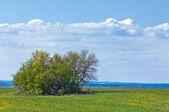 Våren träd utan löv — Stockfoto