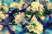 Spring. springtime. springtide. prime — Stock Photo