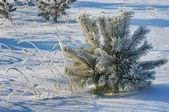 Bäume mit raureif bedeckt — Stockfoto