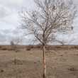 Steppe — Stock Photo #38022113