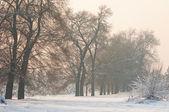 Winter-frost-sonnenuntergang — Stockfoto