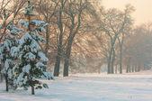 Winter frost sunset — Stock Photo