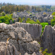 Royalty-Free Stock Photo: The stone forest Shi lin.