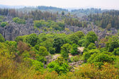Shi Lin Stone forest national park in Yunnan province, China — Stock Photo