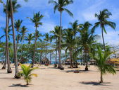 On a tropical island  Philippines — ストック写真