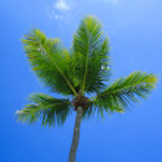 Green palm tree on blue sky background — Stock Photo #24013845