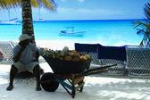 Saona island, kokos — Stockfoto