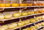 Whole Gouda Cheese — Stock Photo