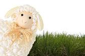 Easter sheep — Stock Photo