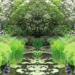 Garden pond - Stock Photo