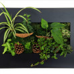 Contemporary wall planter — Stock Photo