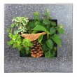 Contemporary wall planter — Stock Photo