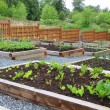 Stockfoto: Community vegetable garden