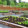 Community vegetable garden — Stock Photo