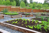 Community vegetable garden — Foto Stock