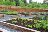 Jardin potager communautaire — Photo