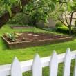 Vegetable garden — Foto de Stock