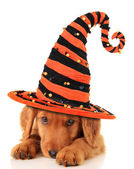 Cachorro de halloween — Foto de Stock