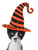 Halloween kitten — Stock Photo