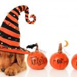 Halloween puppy — Stock Photo