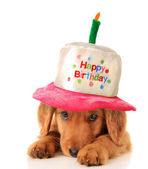 Happy birthday puppy — Stock Photo