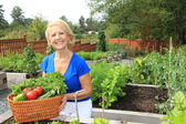 Senior gardener and vegetables. — Stock Photo