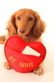 Valentine puppy — Stock Photo