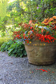 Planter filled with begonias and lobelia — Stock Photo